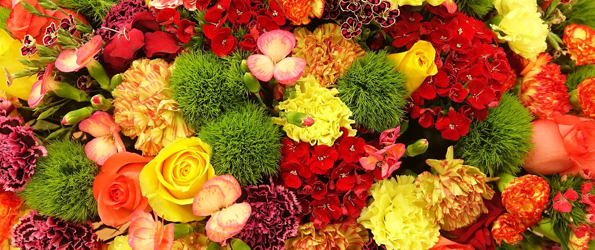 about dreisbach wholesale florists