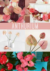 Floral Friday ~ Anthurium