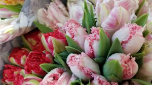 Mother's Day Prebooks - Fresh Cuts, Greens & Potted Plants