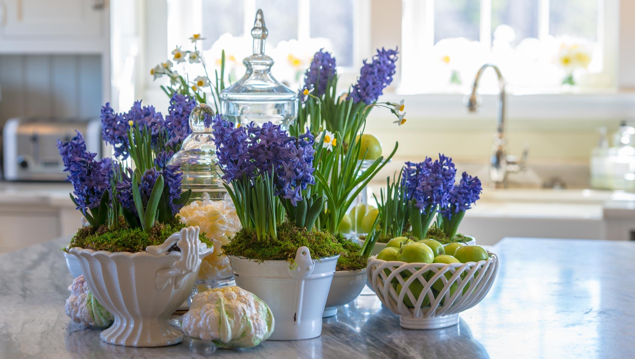 Гиацинт в горшке: уход в домашних условиях, как поливать 74