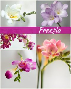 Floral Friday ~ Freesia