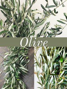 Floral Friday ~ Olive