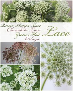 Floral Friday ~ Lace