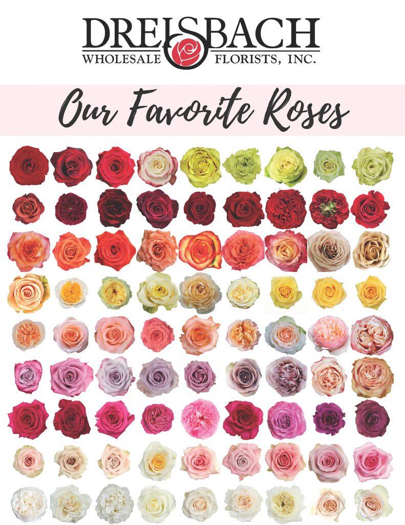 Our Favorite Rose Varieties Dreisbach Wholesale Florists