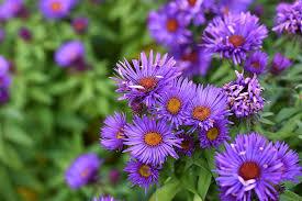 Flower of the Month - September