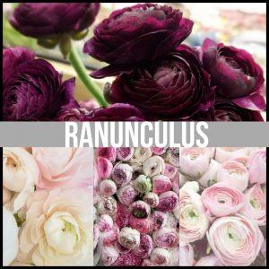 Floral Friday ~ Ranunculus