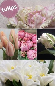 Floral Friday ~ Tulip