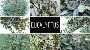 Floral Friday ~ Eucalyptus