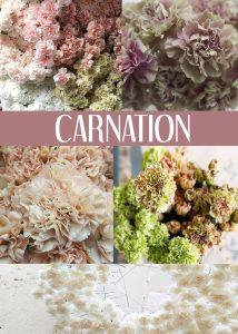 Floral Friday ~ Carnation