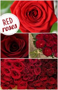 Floral Friday ~ Red Roses