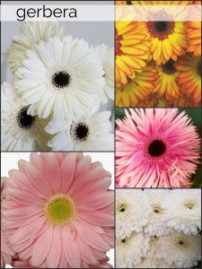 Floral Friday ~ Gerbera