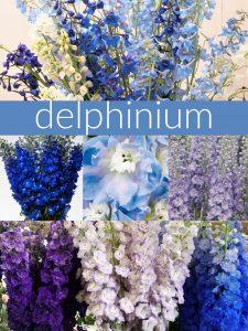 Floral Friday ~ Delphinium