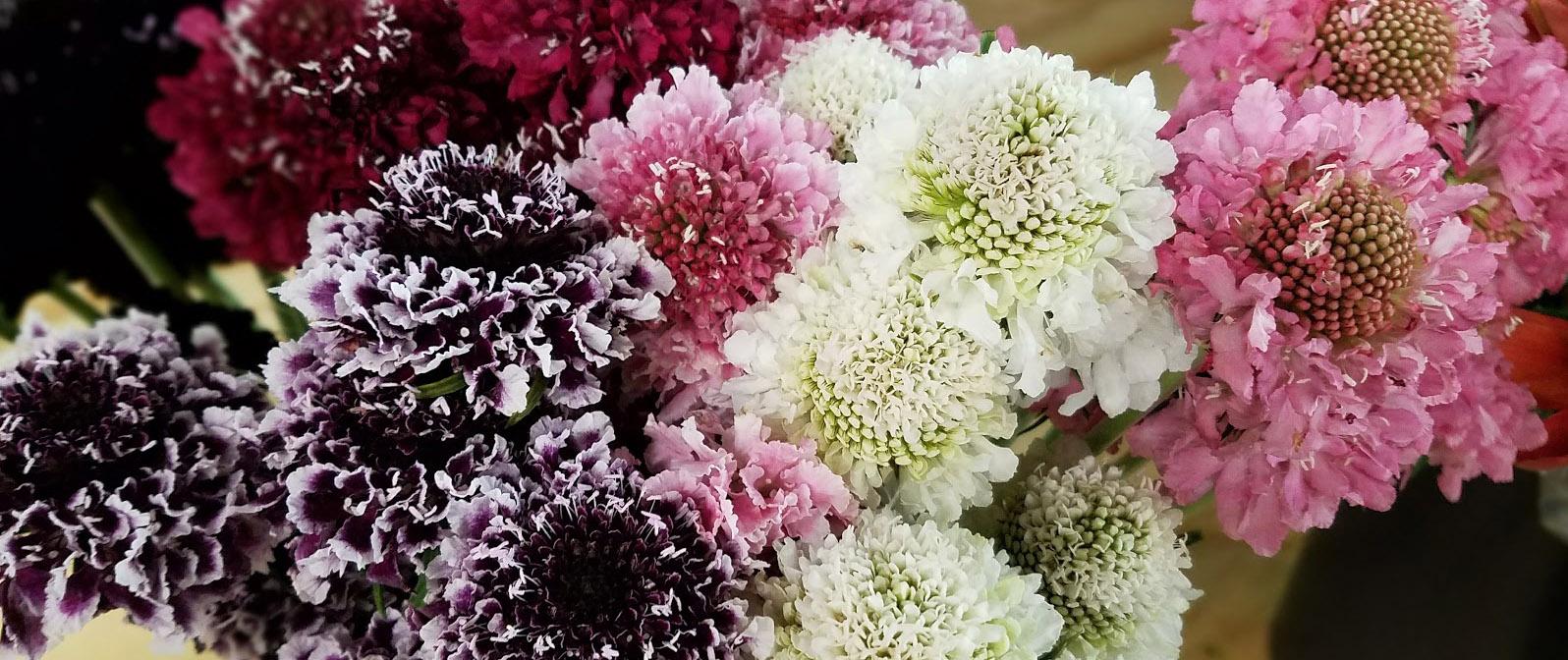 Dreisbach Wholesale Florists