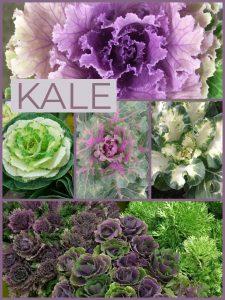Floral Friday ~ Kale