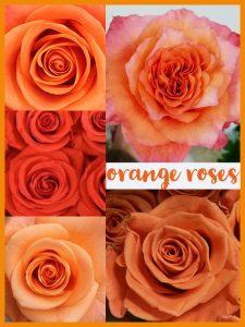 Floral Friday ~ Orange Roses