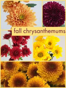Floral Friday ~ Fall Chrysanthemums