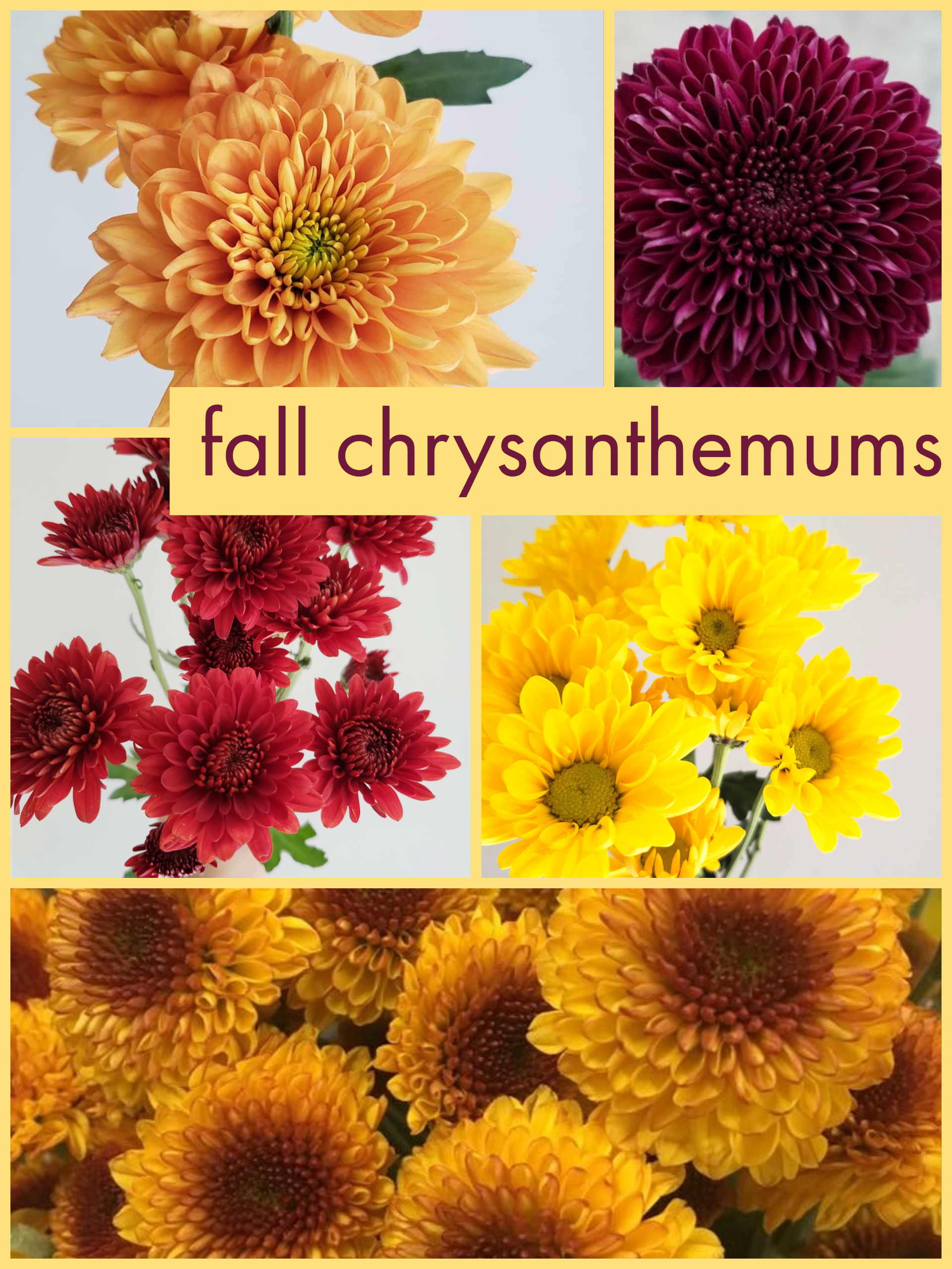 Picture of: Cremone Dreisbach Wholesale Florists