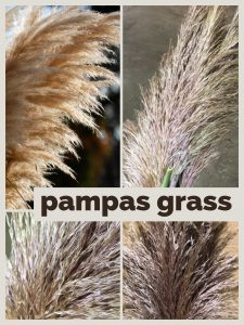 Floral Friday ~ Pampas Grass