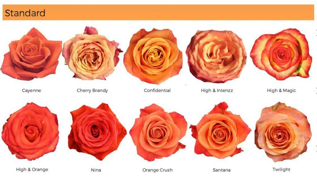 Floral Friday ~ Orange Roses   Dreisbach Wholesale Florists