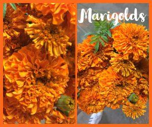 Floral Friday ~ Marigolds