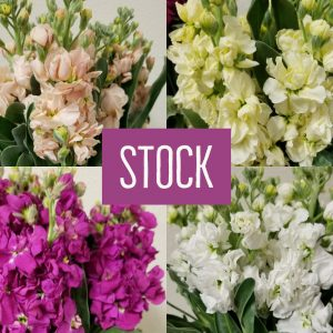 Floral Friday ~ Stock