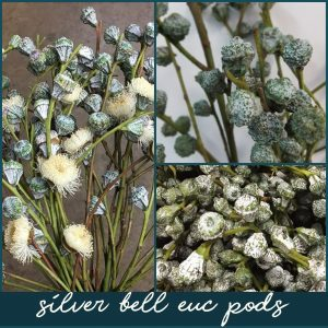 Floral Friday ~ Silver Bell Euc Pods