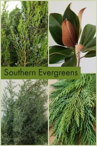 Floral Friday ~ Southern Evergreens