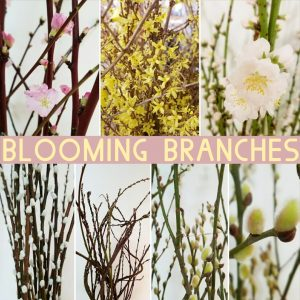 Floral Friday ~ Blooming Branches