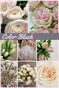 Floral Friday ~ The Color Blush