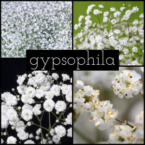 Floral Friday ~ Gypsophila