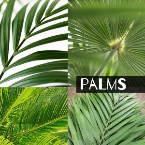 Floral Friday ~ Palms