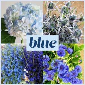 Dreisbach Floral Friday Blue