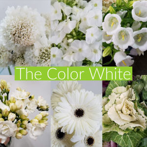 Floral Friday ~ The Color White