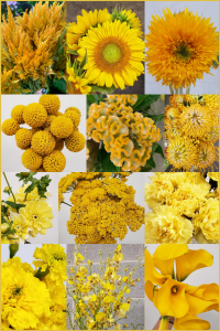 Floral Friday ~ The Color Yellow
