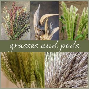 Floral Friday~ Grasses & Pods