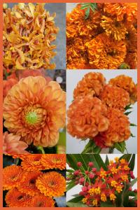 Floral Friday ~ The Color Orange