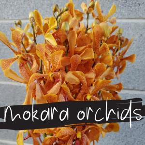 Floral Friday ~ Mokara Orchids
