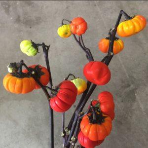 Floral Friday ~ Pumpkins