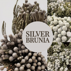 Floral Friday ~ Silver Brunia