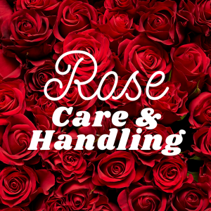 Rose - Care and Handling