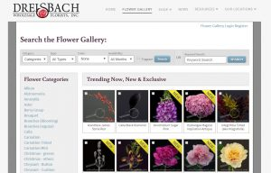 Flower Gallery - Have you seen it?
